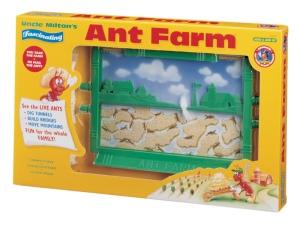ant_farm_1
